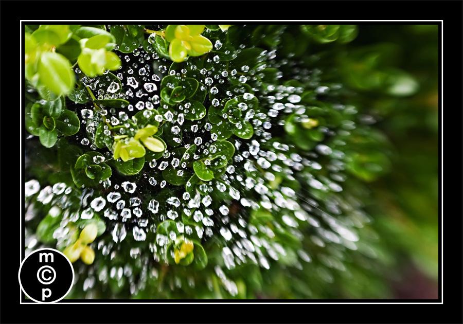 lensbaby 15 Macros with non macro lenses