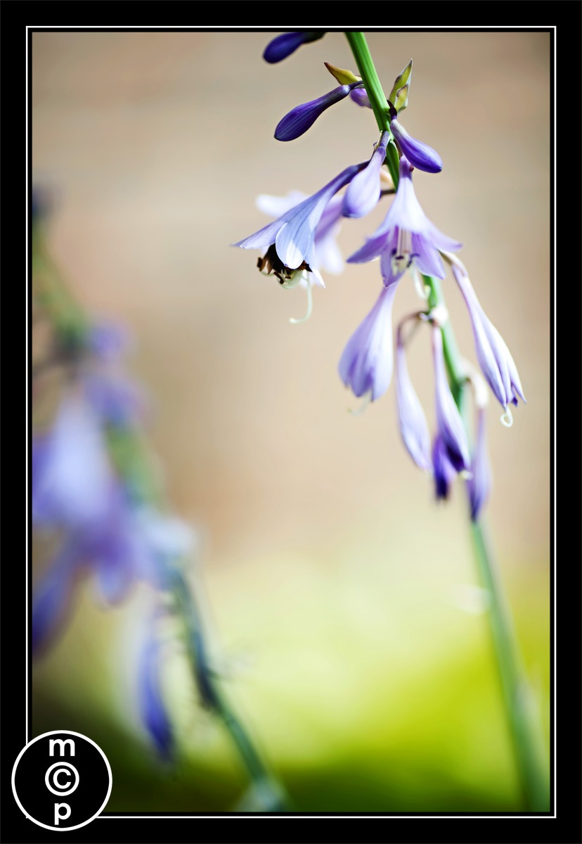 macro flower and bumble bee picture