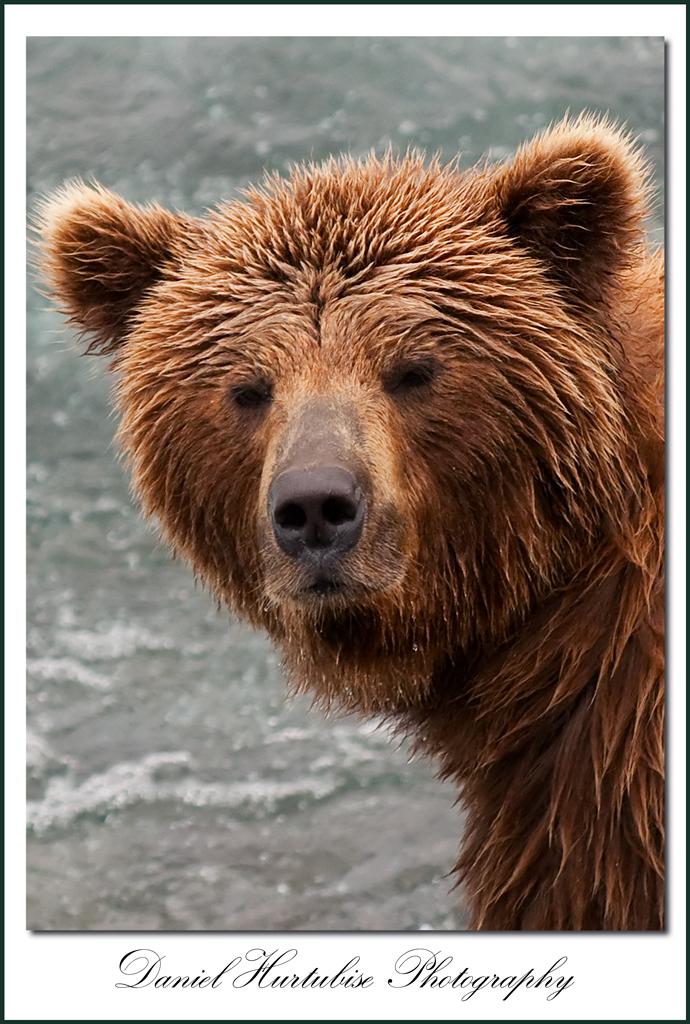 dhb 8627 Interview with Daniel Hurtubise about his trip to photograph bears in the Alaskan Wild