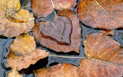 Capture Great Photographs of Fall Leaves: Macro Photography Tips