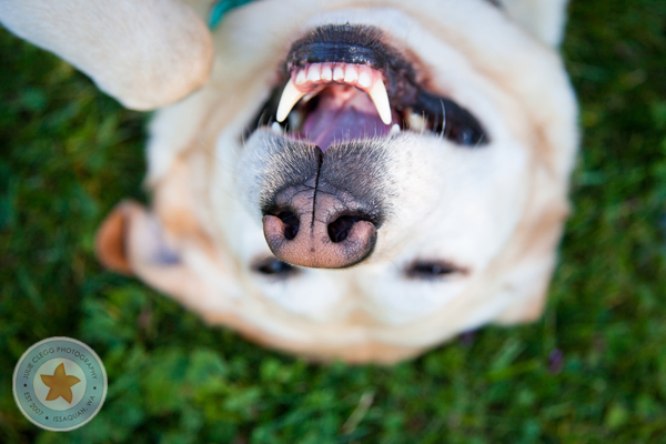 final10 Pet Photography: 7 Surefire Tips for Capturing a Dogs Personality