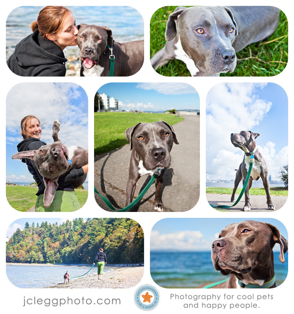 final12 Pet Photography: 7 Surefire Tips for Capturing a Dogs Personality
