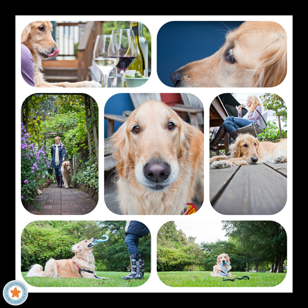 collage of dog and owner