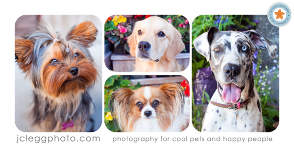 Four dogs in a collage
