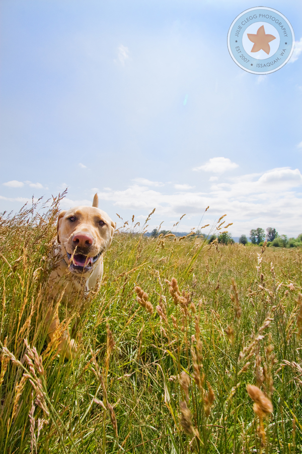 final2 Pet Photography: 7 Surefire Tips for Capturing a Dogs Personality