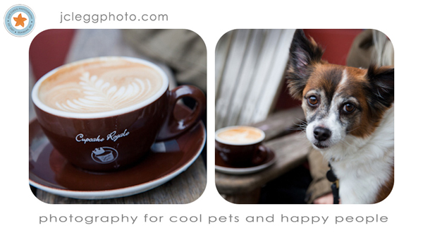 final25 Pet Photography: 7 Surefire Tips for Capturing a Dogs Personality