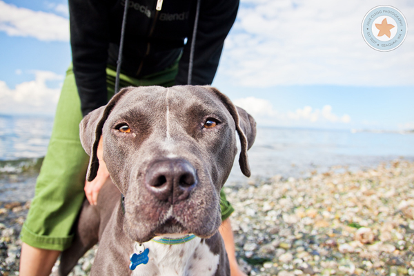 final9 Pet Photography: 7 Surefire Tips for Capturing a Dogs Personality