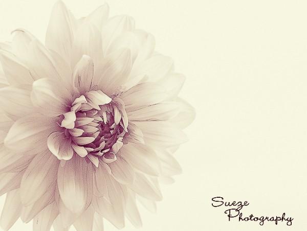 mcp-blog-edit-rose-overlay-with-lemon-water-Pomegranate-038-600x4521