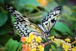 How to Edit Butterfly Images in Photoshop