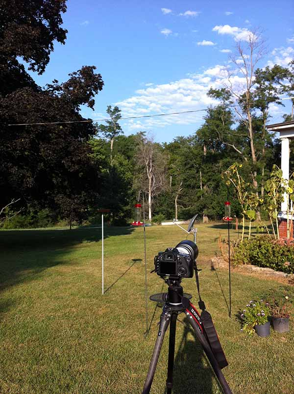 yardsetup A Guide to Photographing Hummingbirds