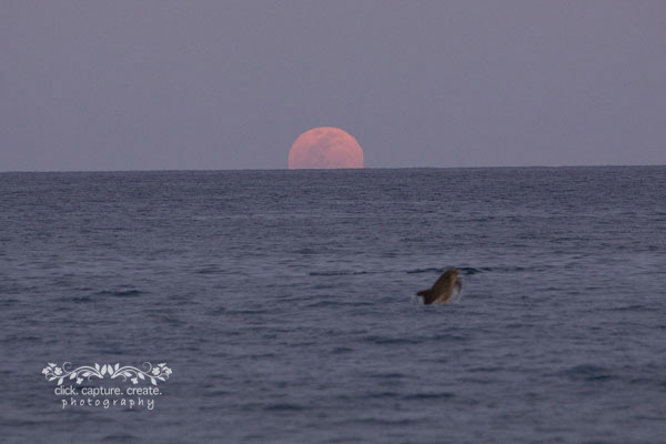 dolphin and the moon