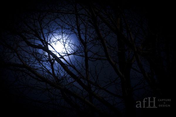 moon behind a tree