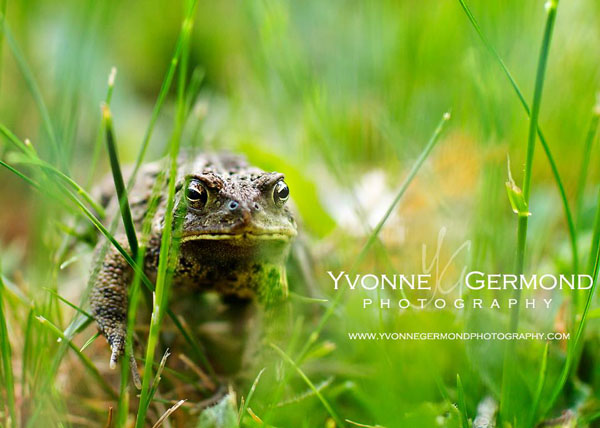 Edit 24 Yvonne Germond1 MCP Photography and Editing Challenge: Highlights from this Week