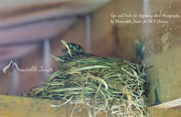 Tips and Tricks for Bird Photography 000 600x3881 6 Tips and Tricks to Beginner Bird Photography