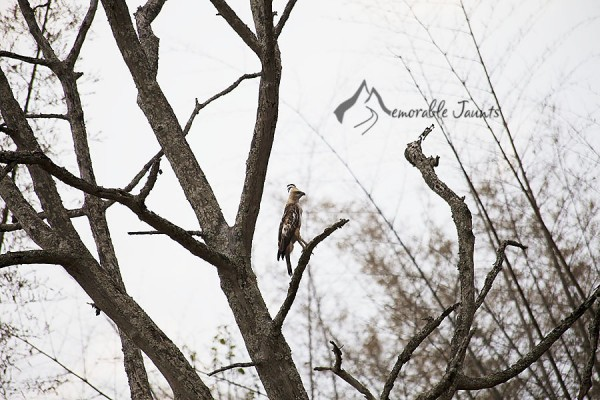 Tips and Tricks for Bird Photography 07 600x4001 6 Tips and Tricks to Beginner Bird Photography