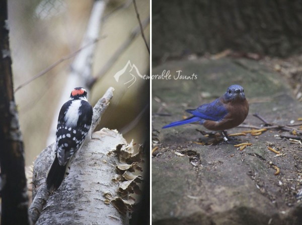 Tips and Tricks for Bird Photography 18 600x4471 6 Tips and Tricks to Beginner Bird Photography
