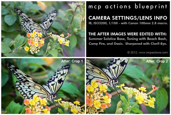 butterfly thoughts 600x4031 How to Edit Butterfly Images in Photoshop
