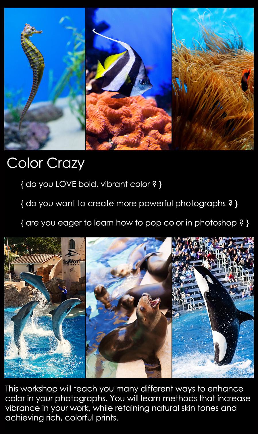 color crazy main New Workshop Added   COLOR CRAZY: Enhancing Color In Photoshop