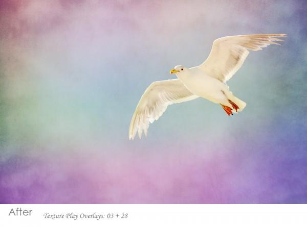 using-textures-on-bird-photos