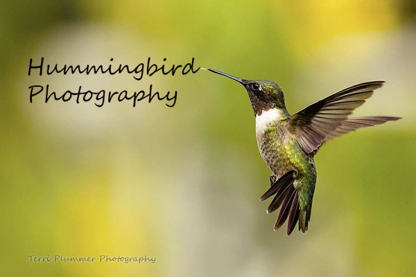 A Guide to Photographing Hummingbirds