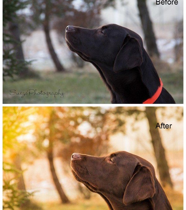 Bringing Sunshine and Warmth Into Your Photos Using Lightroom