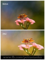 ST4 600x800 150x200 How to Soften Wildlife Images with Photoshop Actions