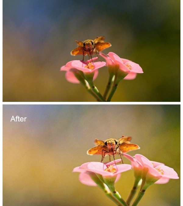 Edited Photographs with Minor Changes Create Big Results