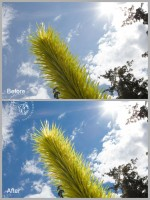 chihuly ba 600x800 150x200 How to Effectively Reduce Noise Using Lightroom 3 Noise Reduction