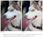 dog before and after1 600x540 150x135 Pet Photography: 7 Surefire Tips for Capturing a Dogs Personality