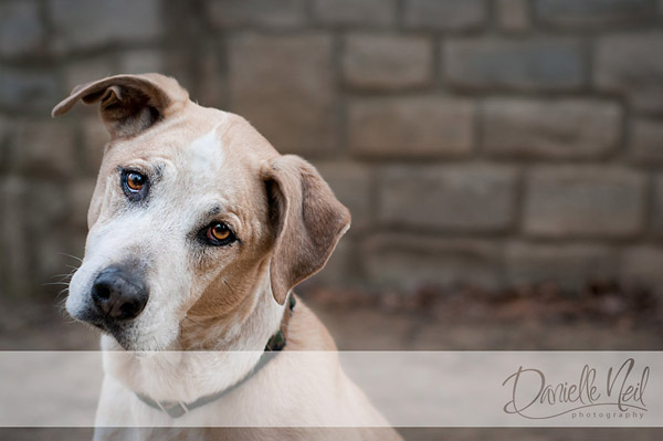 mix dog photograph Working with Dogs and Their Owners for Amazing Pet Portraits