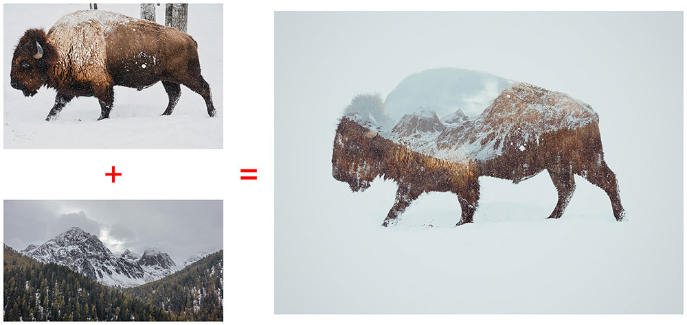 before-after-bison-double-exposure Double Exposure Photoshop Action