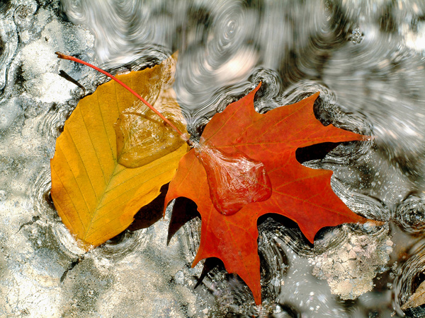 120 Capture Great Photographs of Fall Leaves: Macro Photography Tips Guest Bloggers Photography Tips