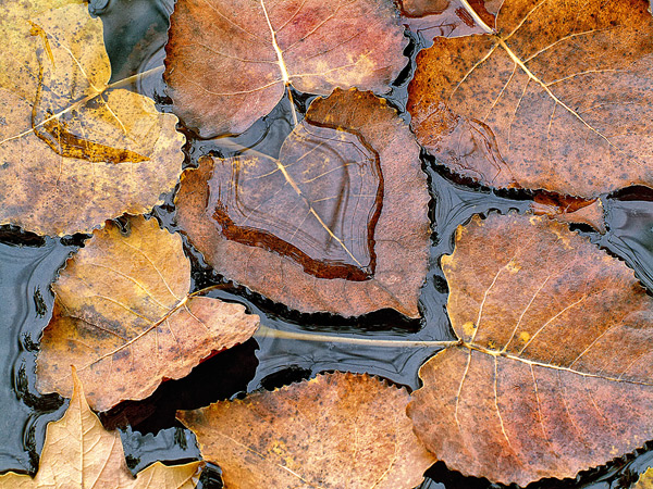 125 Capture Great Photographs of Fall Leaves: Macro Photography Tips Guest Bloggers Photography Tips