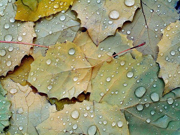 139 Capture Great Photographs of Fall Leaves: Macro Photography Tips Guest Bloggers Photography Tips