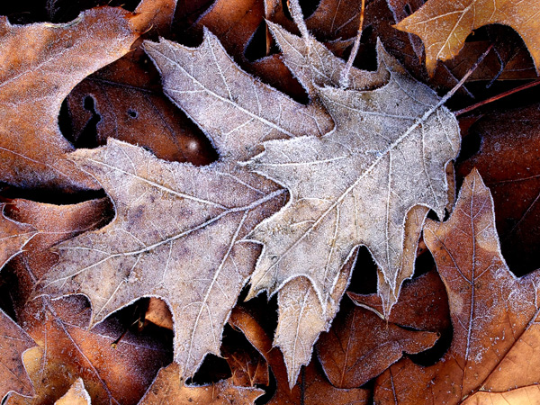 566 Capture Great Photographs of Fall Leaves: Macro Photography Tips Guest Bloggers Photography Tips