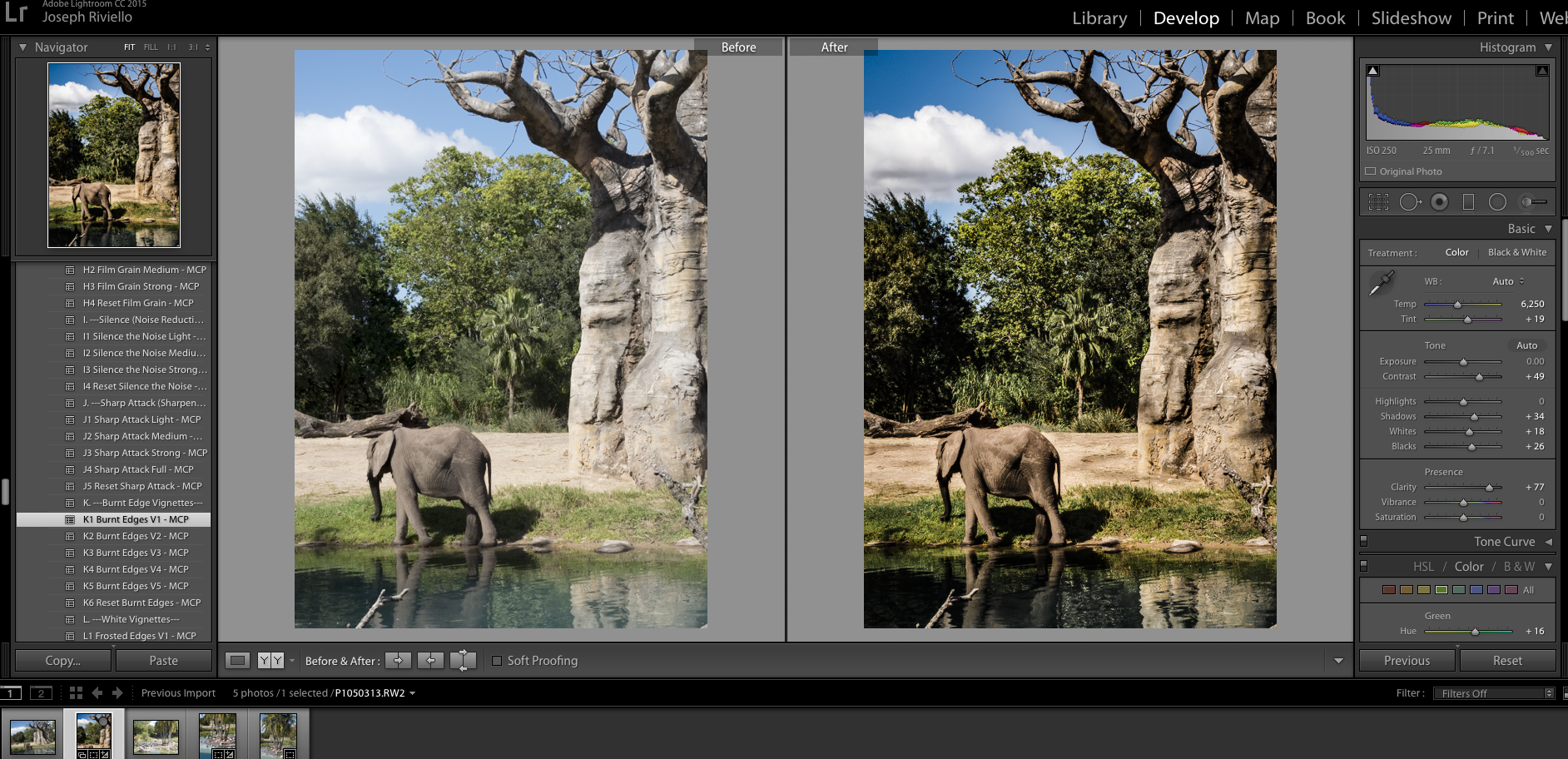 Elephant-before4 HDR in Lightroom - How to Get the HDR Look You Want Uncategorized