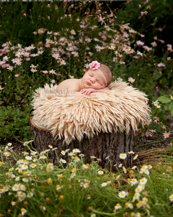 IMG_8372-treestump 7 Essential Newborn Photography Props to Start Your Collection Guest Bloggers Photo Sharing & Inspiration Photography Tips
