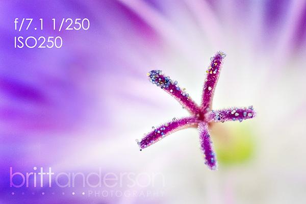 MCP-Macro-Photography-2 Macro Photography Basics: Get Amazing Closeup Photos Guest Bloggers Photography Tips