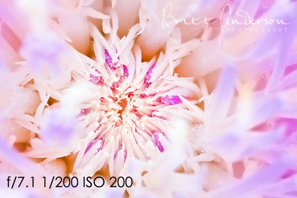 MCP-Macro-Photography-3 Macro Photography Basics: Get Amazing Closeup Photos Guest Bloggers Photography Tips