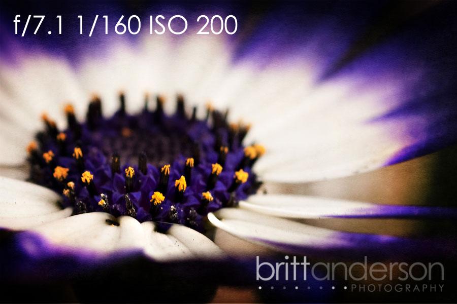 MCP-Macro-Photography-4 Macro Photography Basics: Get Amazing Closeup Photos Guest Bloggers Photography Tips