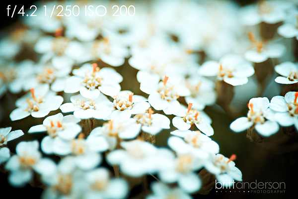 MCP-Macro-Photography-5 Macro Photography Basics: Get Amazing Closeup Photos Guest Bloggers Photography Tips