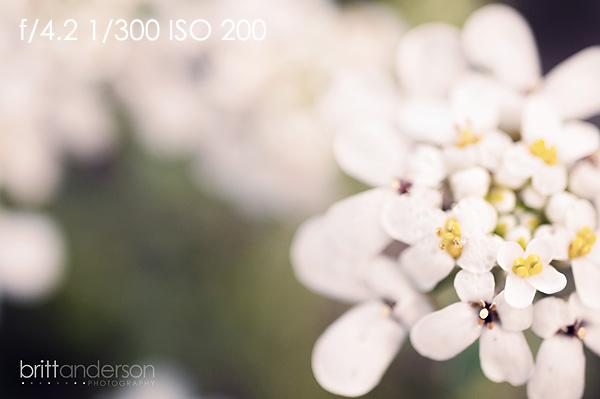 MCP-Macro-Photography-6 Macro Photography Basics: Get Amazing Closeup Photos Guest Bloggers Photography Tips