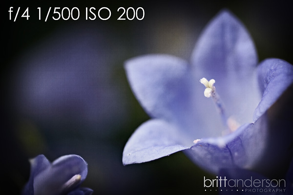 MCP-Macro-Photography Macro Photography Basics: Get Amazing Closeup Photos Guest Bloggers Photography Tips