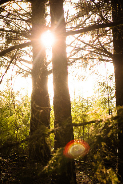 Sunflare-Jillustrated Project MCP: Highlights for May, Challenge #2 Activities Assignments Photo Sharing & Inspiration