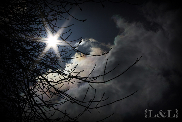 Sunflare-LadyLyn Project MCP: Highlights for May, Challenge #2 Activities Assignments Photo Sharing & Inspiration
