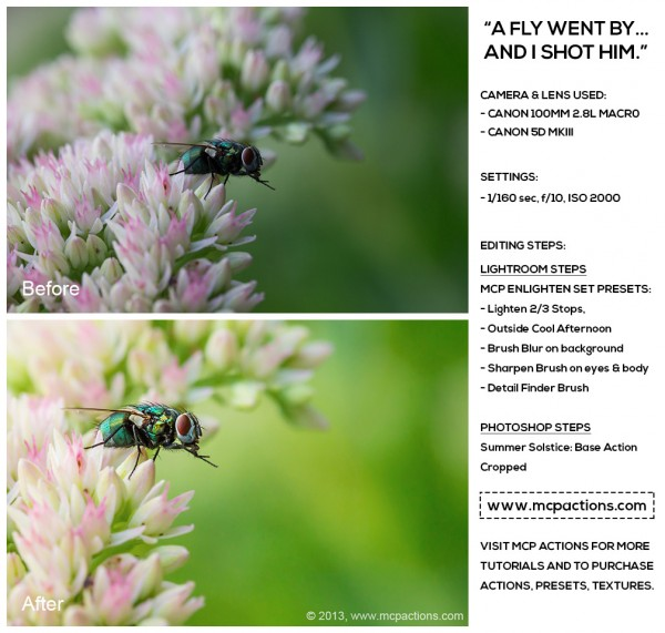 a-fly-went-by-600x571 How To Edit Macro Bug Photography With Actions and Presets Blueprints Photoshop Actions