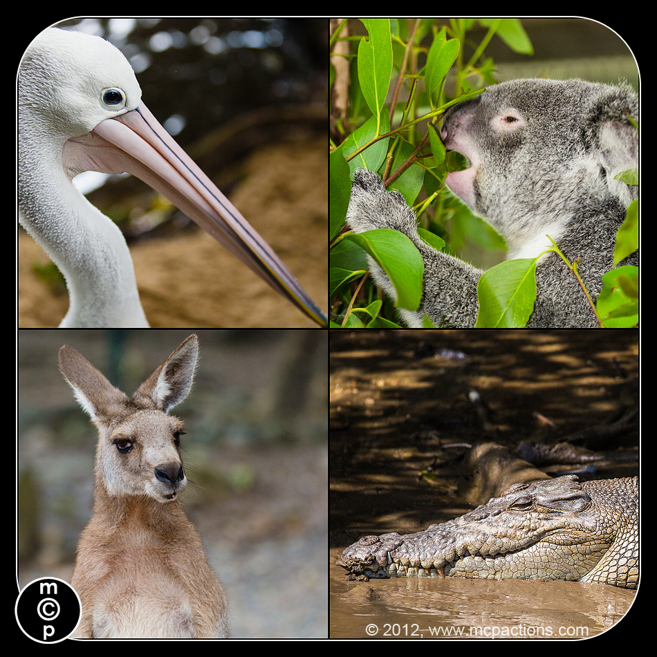 animals-of-cairns 10 Things to Photograph on Every Vacation MCP Thoughts Photo Sharing & Inspiration Photography & Photoshop News Photography Tips