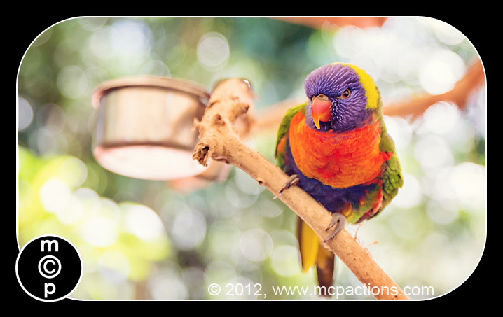 bird 10 Things to Photograph on Every Vacation MCP Thoughts Photo Sharing & Inspiration Photography & Photoshop News Photography Tips