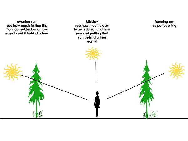 rp_blocking-sun-trees.gif
