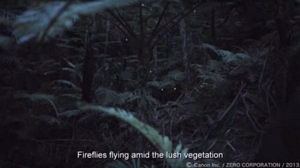 canon-low-light-video-yaeyama-hime-fireflies Canon captures stunning low-light Yaeyama-hime fireflies video News and Reviews